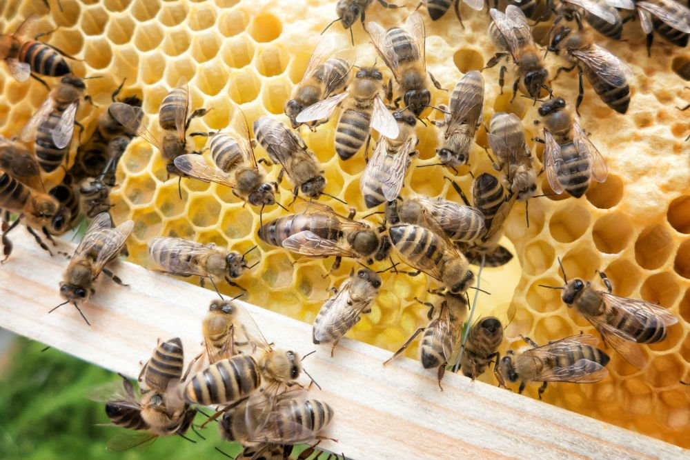 Specialist Group adds Bee Farming to Sustainability Actions